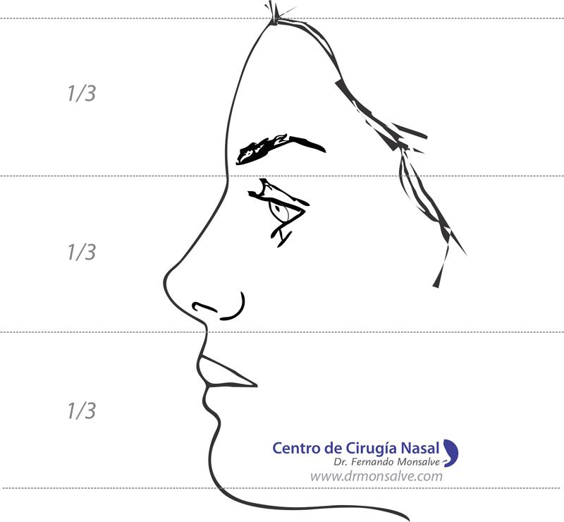 Rinoplastia: los tercios que marcan la simetria para obtener una nariz perfecta